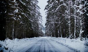 大雪后的道路树林风光摄影高清图片