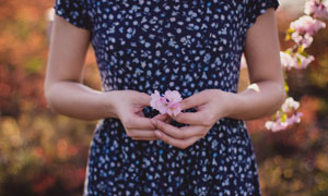 拿在双手中的小花特写摄影高清图片