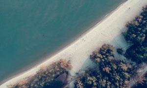 大海沙滩树木鸟瞰视角摄影高清图片