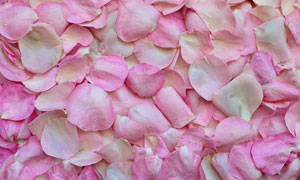 密集散落的粉红色花瓣摄影高清图片