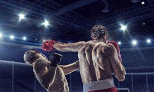 激战正酣的拳击运动员摄影高清图片