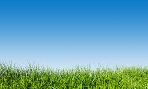蔚蓝天空青青草丛全景摄影高清图片