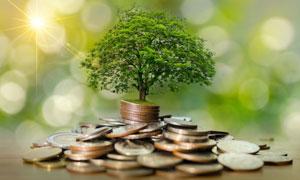 长在硬币上的一棵大树创意高清图片