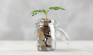 玻璃存钱罐上长出的小幼苗高清图片