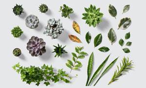 叶子与多肉植物等主题PSD分层素材