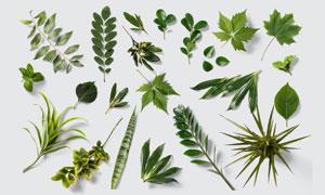 多种植物绿色叶子主题PSD分层素材