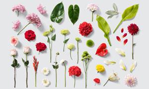 绿叶与花花绿绿的鲜花PSD分层素材