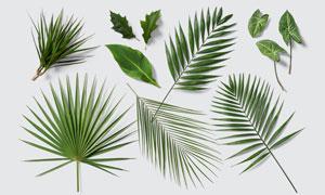 几种绿色植物叶子主题PSD分层素材