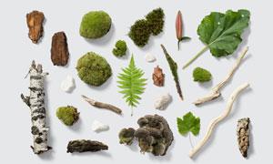 木头石头与青苔绿叶等PSD分层素材