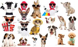 各种宠物狗狗免抠图PSD分层素材