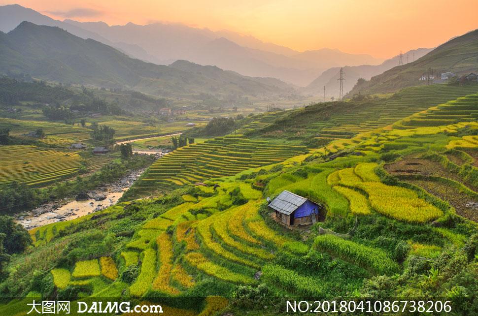 关 键 词: 高清图片大图素材摄影自然风景风光农田田地农业庄稼地水稻