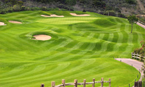 低洼不平的高尔夫球场风光高清图片