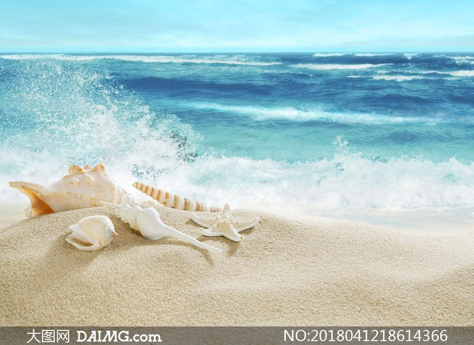 沙滩贝壳与海边的浪花摄影高清图片