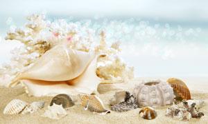 海边沙滩上的贝壳微距摄影高清图片
