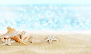 梦幻光斑衬托下的海星贝壳高清图片