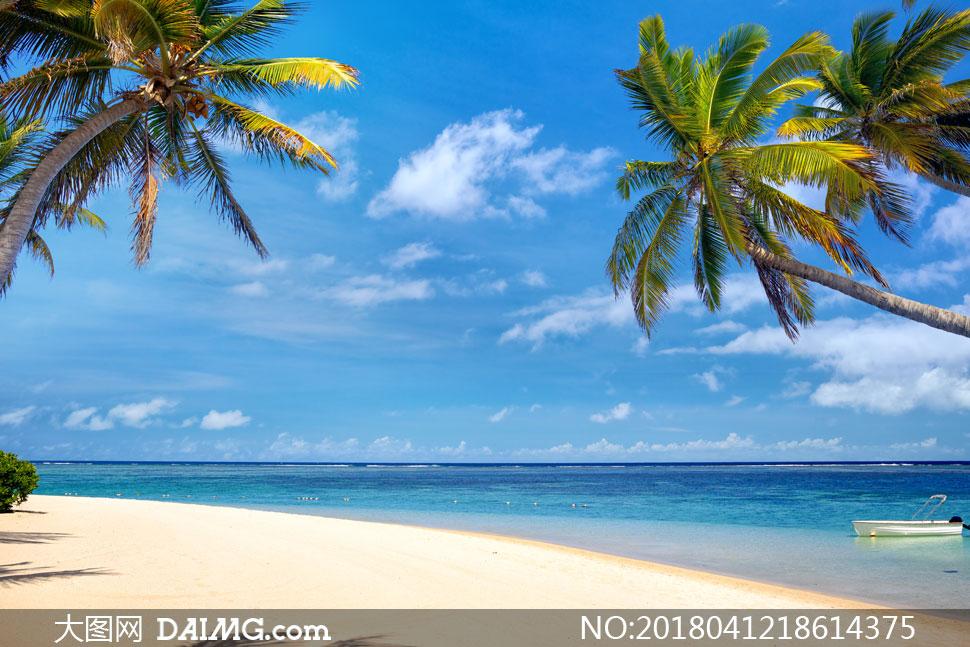 蓝天白云海景与海边的椰树高清图片