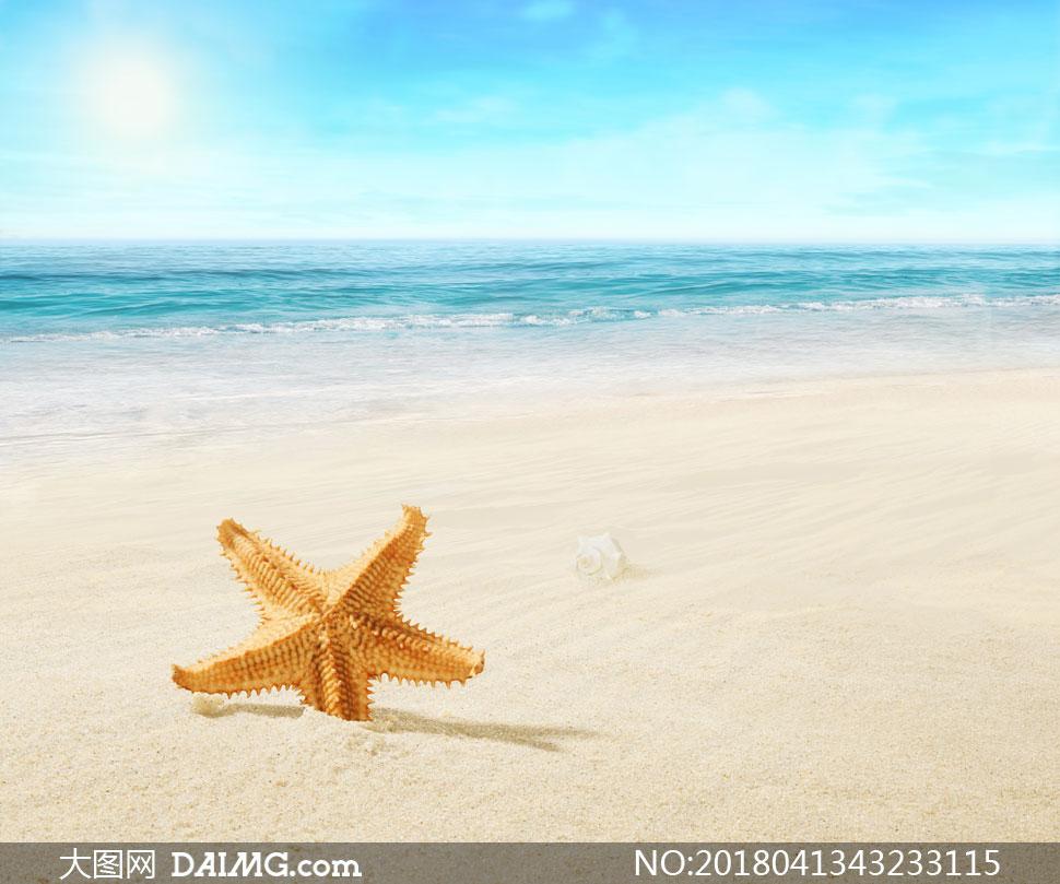 海星贝壳与在阳光下的大海高清图片