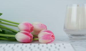 桌上粉红色的郁金香花摄影高清图片