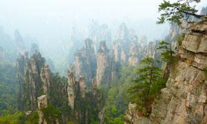 崖壁长出了小树的山峰风光 澳门线上必赢赌场