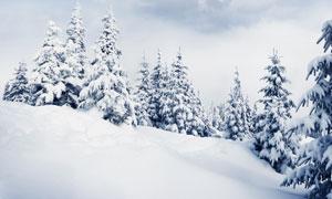 冬天山坡上的树木雪景摄影高清图片