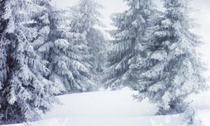 挂满了积雪的树木风光摄影高清图片