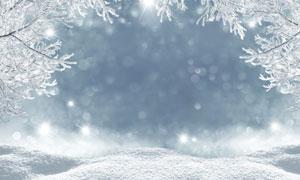 冰雪树枝与梦幻效果的光斑高清图片