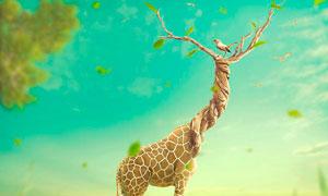 创意的长颈鹿合成PS教程素材