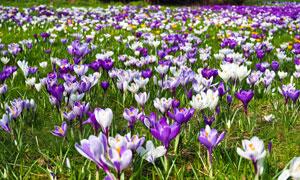 开满了鲜花的草地风光摄影高清图片