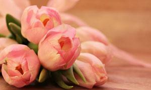 几朵郁金香花近景特写摄影高清图片