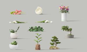 花朵與綠葉植物等主題PSD分層素材