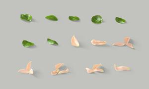 不同形态的绿叶与花瓣PSD分层素材