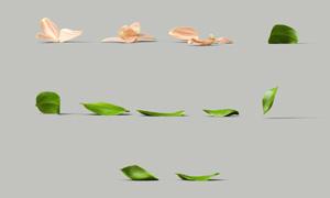 綠葉花瓣主題元素免摳PSD分層素材
