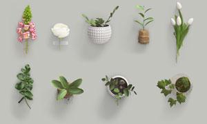 鮮花與土培盆栽植物貼圖模板源文件