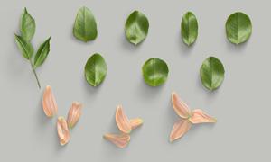 幾片綠葉與花瓣等主題PSD分層素材