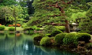 公园湖畔景观树木风光摄影高清图片