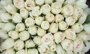 紧密排列的白色玫瑰花摄影高清图片