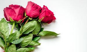 玫瑰花与心形编织品等摄影高清图片