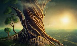 神秘百年老树逆光效果创意高清图片