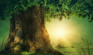 郁郁葱葱大树逆光效果创意高清图片