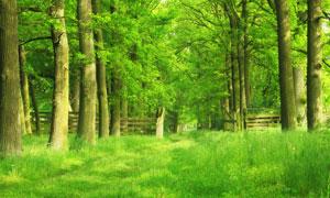 春夏时节绿树青草风景摄影高清图片