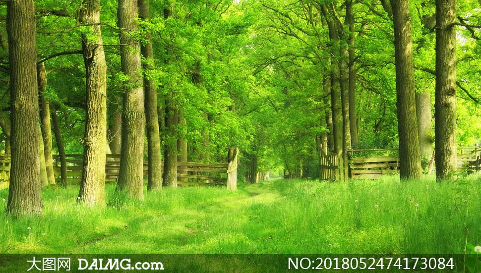 绿树青草风景摄影高清图片下载 关 键 词: 高清图片大图素材摄影自然