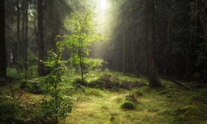 照耀进阳光的树林风光摄影高清图片