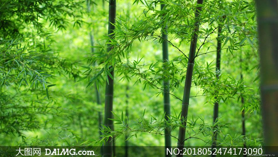 翠綠色的竹林自然風景攝影高清圖片