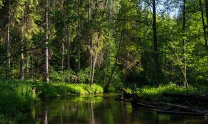 树林中的河流自然风光摄影高清图片