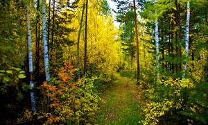 秋天层林尽染的小树林摄影高清图片