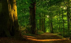 春夏季节的小树林风景摄影高清图片