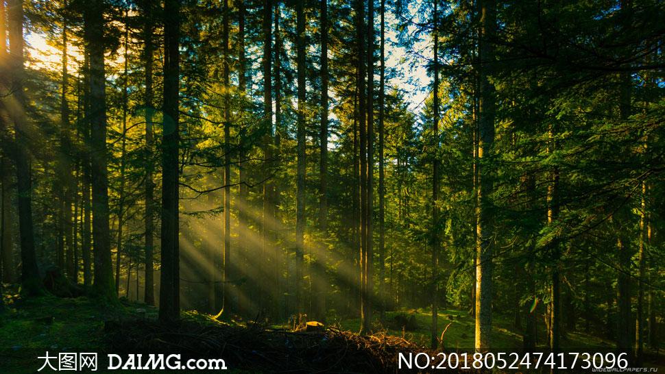 照射进晨光的树林风景摄影高清图片