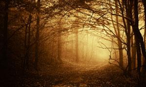 从树林穿梭的神秘小路摄影高清图片