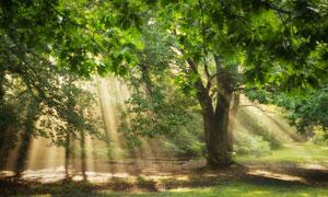 树林中洒到地上的阳光摄影高清图片
