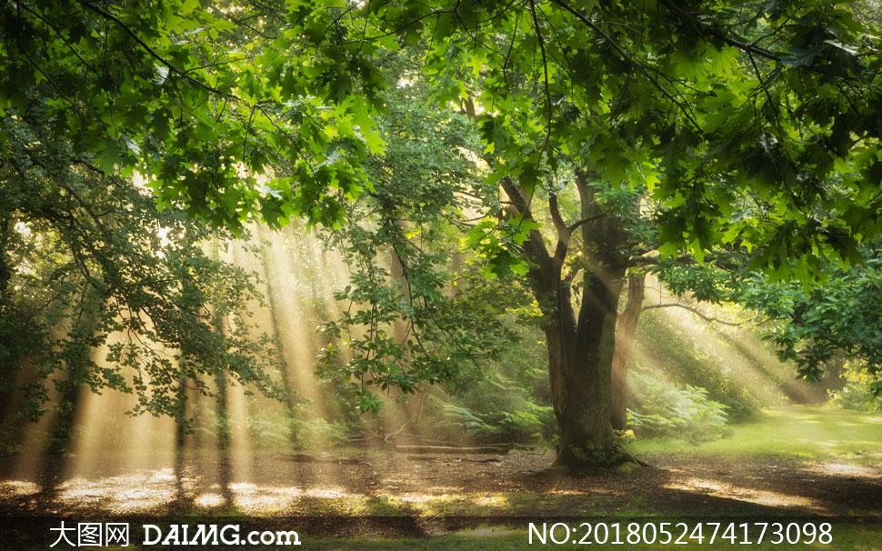关 键 词: 高清图片大图素材摄影自然风景风光树木树林茂密茂盛树枝